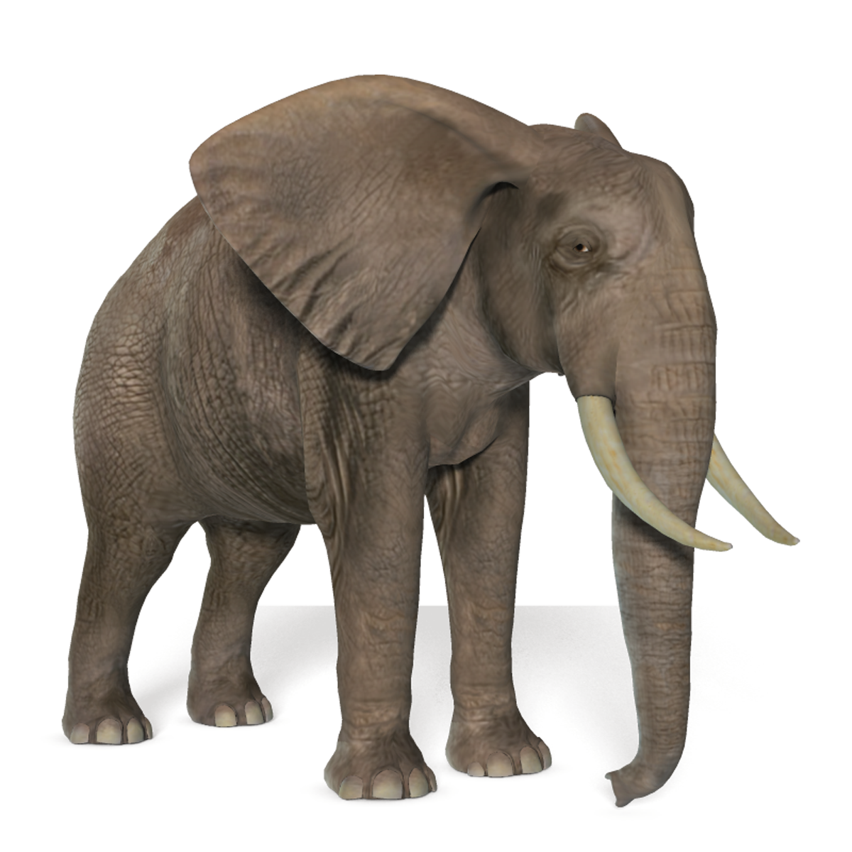 Elephant Png Resolution 1200x1200 Transparent Png Image Imgspng Over 411 elephant png images are found on vippng. imgspng